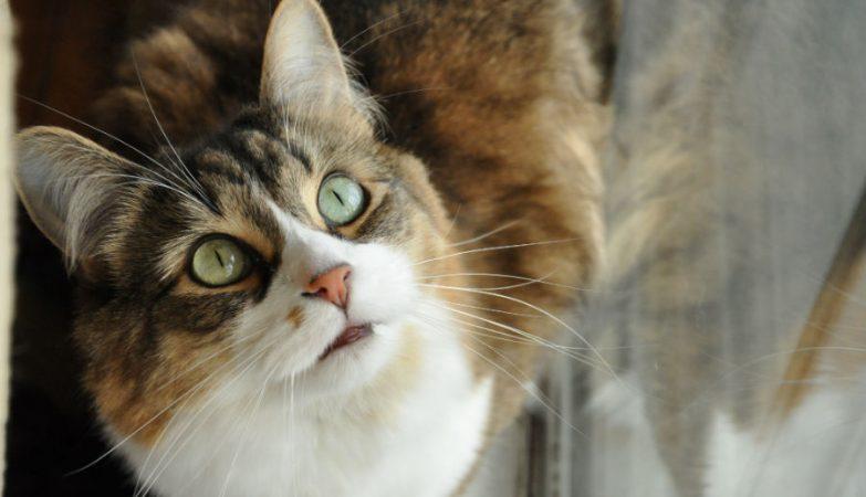 gato, animal