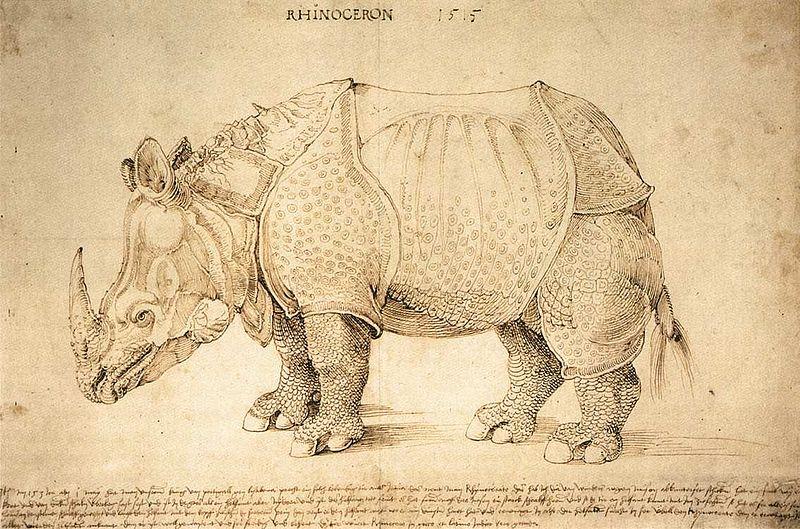 """""""Rhinoceros"""" de Albrecht Dürer (1471–1528) (foto: wikimedia)"""