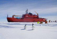 O quebra-gelo australiano Aurora Australis e pinguins