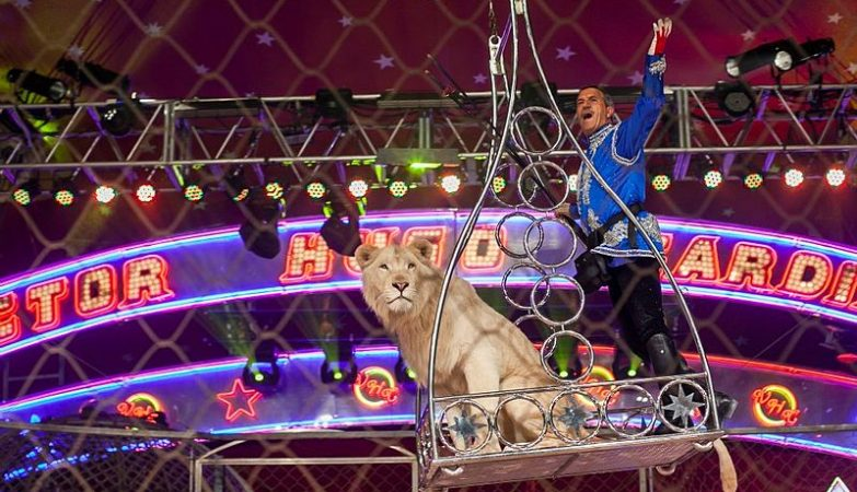 Leão no circo Victor Hugo Cardinali (foto: Gdiniz / wikimedia)