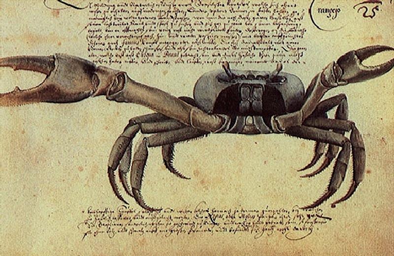 """""""Caranguejo, o Livro dos Animais"""", aguarela de Zacharias Wagenaer, 1641"""