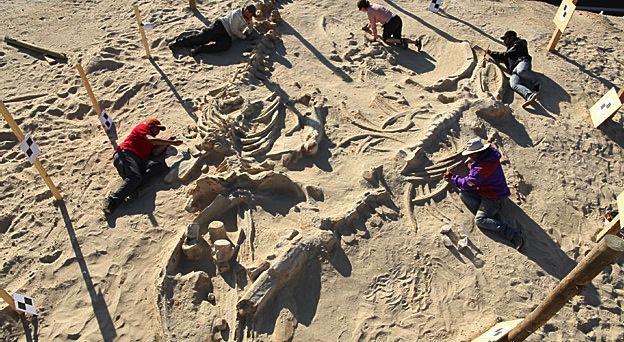 Esqueletos estão em ótimo estado de conservação
