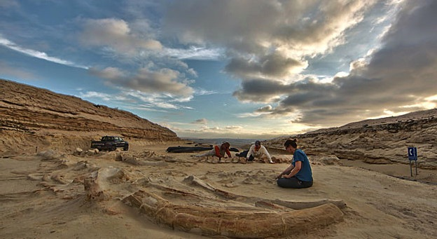 Centenas de fósseis ainda precisam de ser analisados em Cerro Ballena