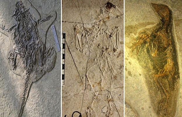 Liaoning, a Pompeia do Cretáceo: Fósseis com 120 milhões de anos de animais chineses estão em ótimo estado de conservação