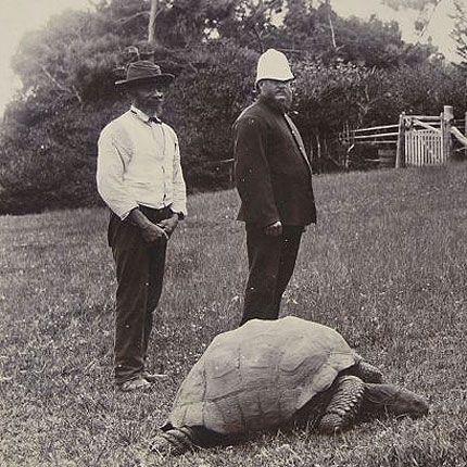 A tartaruga Jonathan numa fotografia tirada cerca do ano de 1900, em Santa Helena.