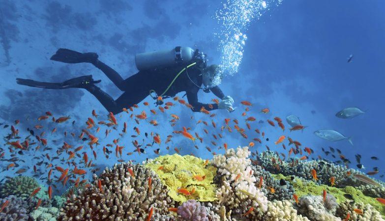 Grande Barreira de Coral, Australia