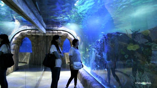 Oaquário subterâneo na capital mexicana será o maior da américa latina
