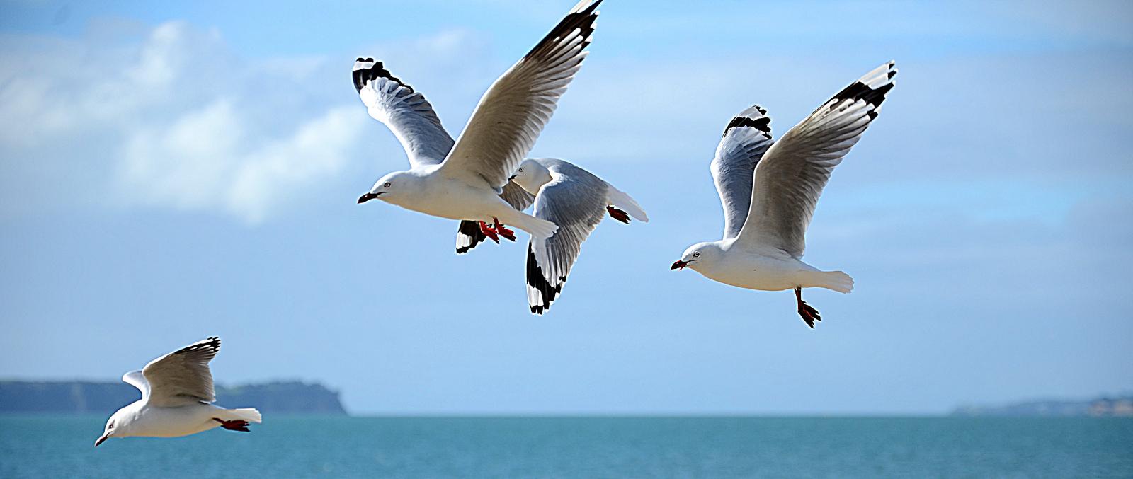 Resultado de imagem para gaivotas