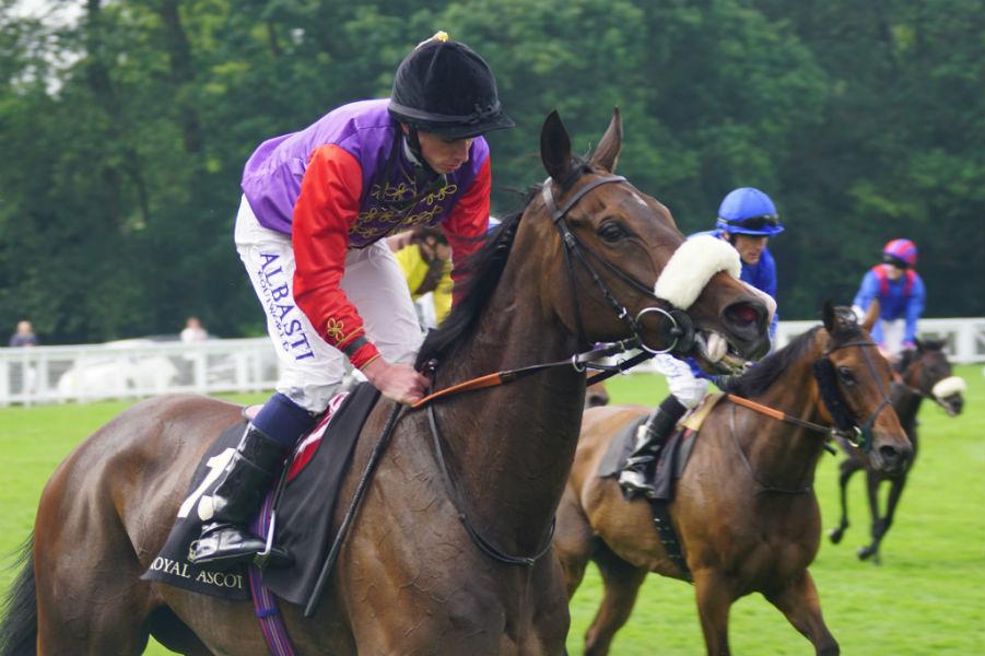 Cavalo Estimate