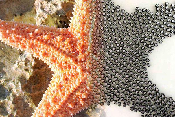 Kilobots (à direita) organizam-se na forma de uma estrela do mar