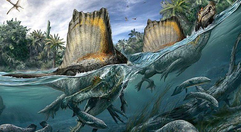 O espinossauro é o maior animal carnívoro conhecido. Alimentava-se de tubarões e peixes gigantes