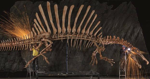 O fóssil de espinossauro foi encontrado nas areias do Sahara, no norte de África