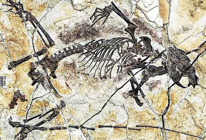 Os primeiros mamíferos poderão ter surgido 40 ou 50 milhões de anos antes do que sempre se pensou.