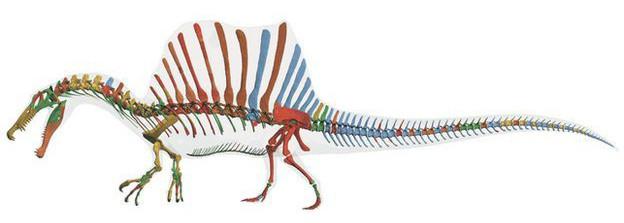 Diversas características  sugerem que o espinossauro era semi-aquático