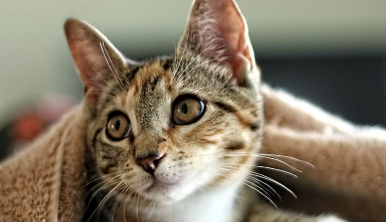 A especialista quer ver a política de apenas um gato por casa implementada para reduzir a população felina nas áreas urbanas