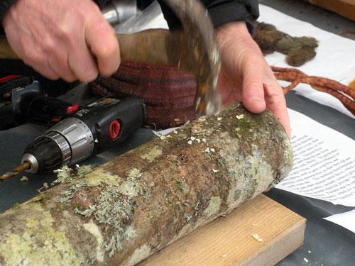 Shiitake: inoculação em troncos de carvalho