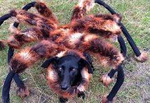 O Cão-Aranha de SA Wardega
