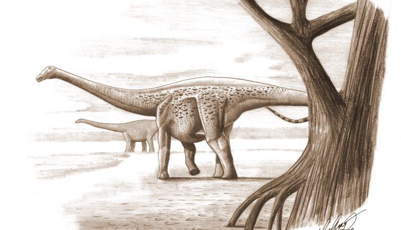 Magyarosaurus Dacus, um saurópode anão