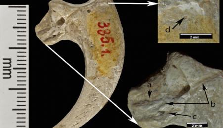 As peças descobertas em Krapina são as jóias mais antigas do mundo: 130 mil anos
