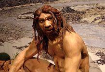 O Homo heidelbergensis poderá ser o antepassado comum do Homo neanderthalensis e do Homo sapiens.