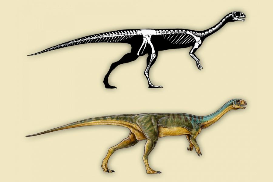 """Uma reconstrução do esqueleto e conceito artístico da aparência do Chilesaurus diegosuarezi: """"verdadeiramente, uma mistura bizarra"""""""
