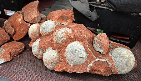 Em 2005 foram encontrados na região 10.008 ovos de dinossauro