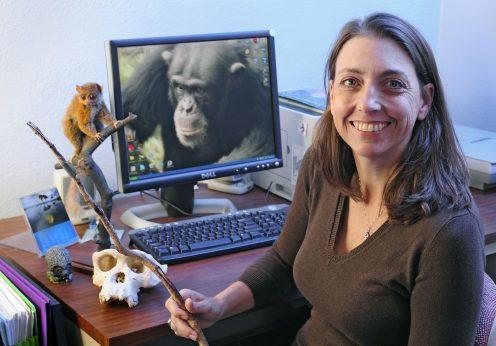 A antropóloga Jill Pruetz com uma das varas afiadas que os chimpanzés de Fongoli caçam galagos.