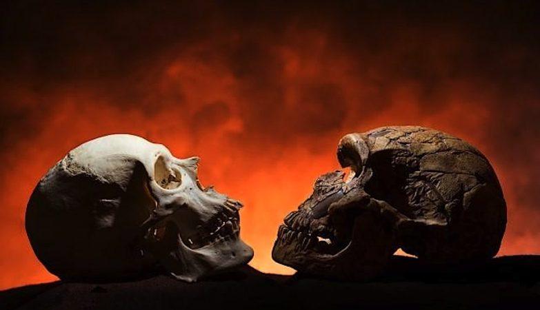 Comparação de crãnios de homo sapiens (esquerda) e neandertal (direita). O homo sapiens tem queixo, o neandertal não.