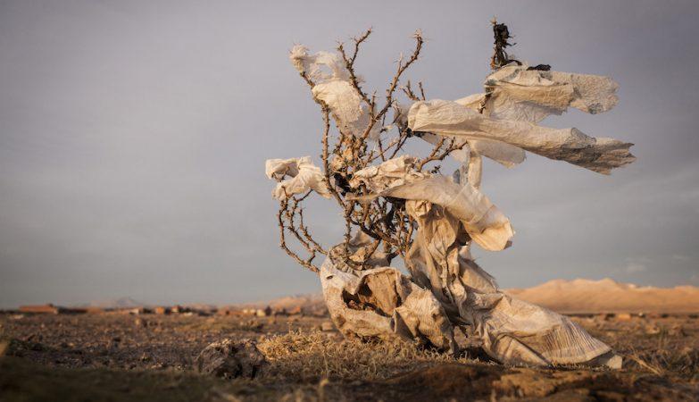 """""""Árvores de Plástico"""": Nas planícies da Bolívia, sacos de plástico viajam com o vento até ficarem presos em arbustos, alterado a paisagem."""