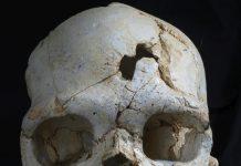 O crânio descoberto em Espanha é a mais antiga prova conhecida de uso deliberado de força letal contra um humano