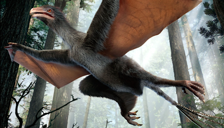 Yi Qi, um dinossauro com asas de morcego