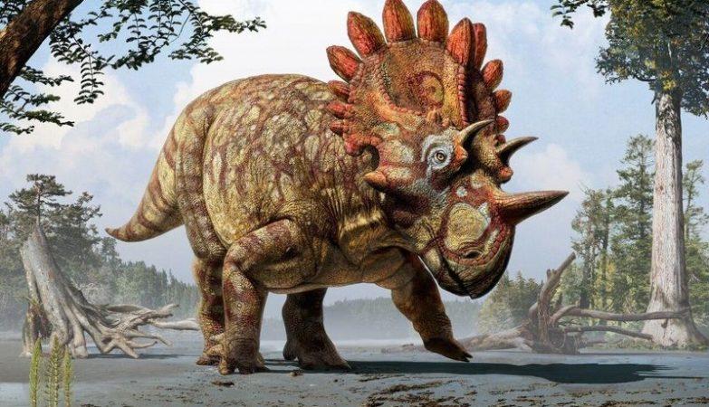 Conceito artístico do  Regaliceratops peterhewsi, o primo do Triceratops agora descoberto