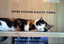 Tama, a gata chefe da estação de Kishi, em Kinokawa, Wakayama, no Japão