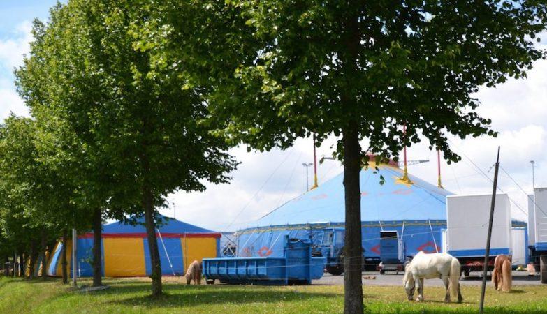 O elefante fugiu de um circo montado em Buchen