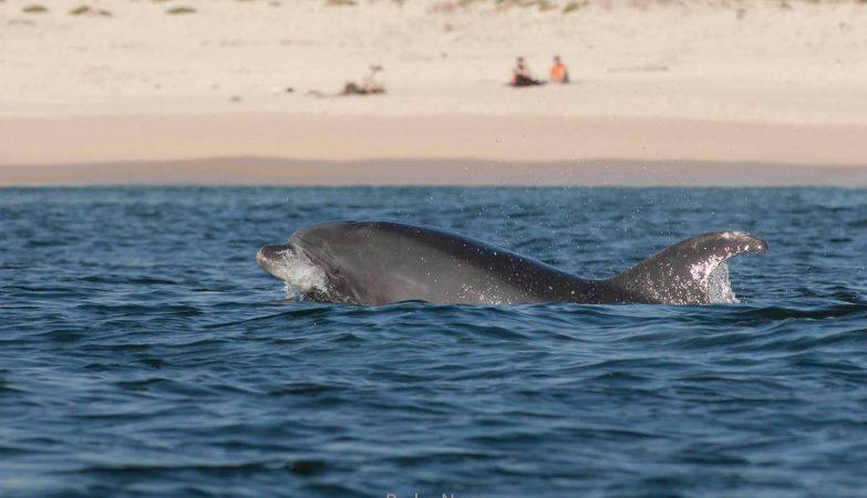 O golfinho Asa