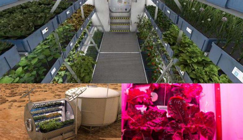 Tecnologia de cultivo de plantas no espaço denominada Veggie