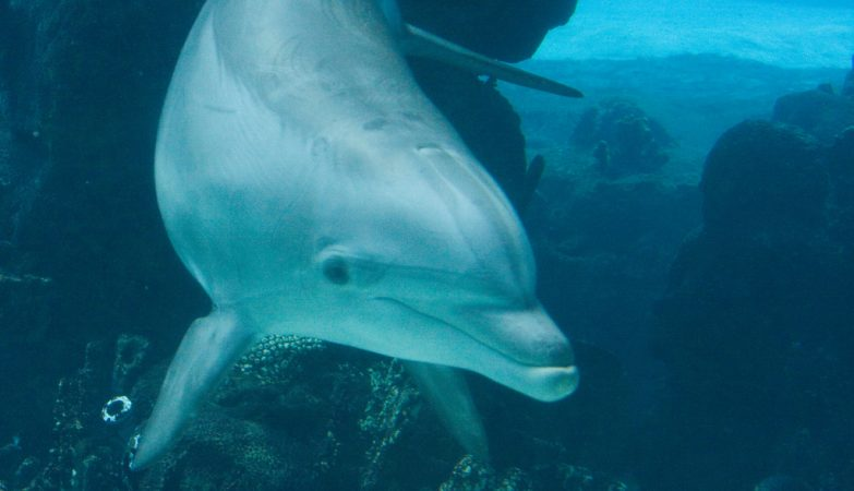 O Hamas não divulgou fotos do golfinho que afirma ter capturado
