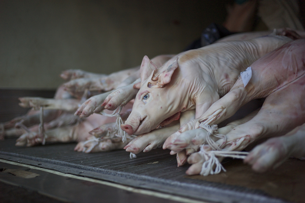 China releases pork reserves to curb prices on New Year's Eve ...