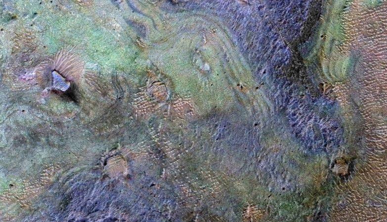 Esta imagem combina informação de dois instrumentos numa sonda da NASA para mapear a cores a composição do solo da região de Nili Fossae em Marte. Os depósitos ricos em carbonatos (verde) contêm parte do carbono presente no dióxido de carbono da atmosfera.