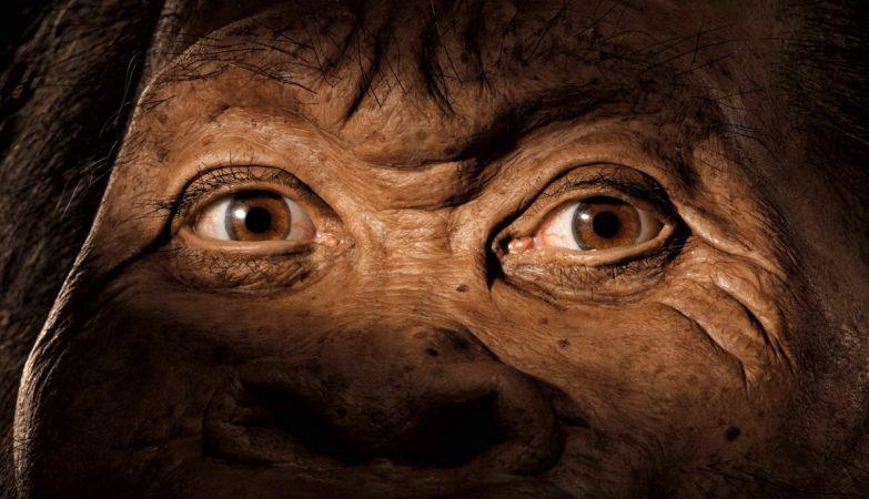 Reconstituição da face do Homo naled a partir do crânio (detalhe)