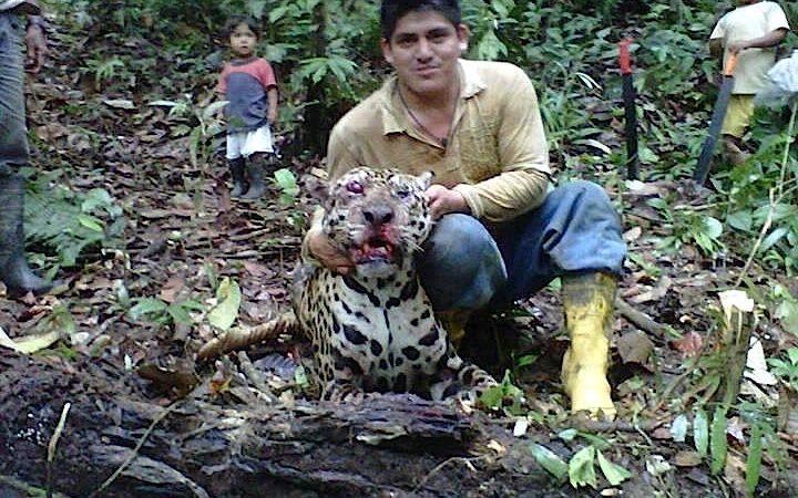 O caçador colocou uma fotografia do jaguar morto no Facebook