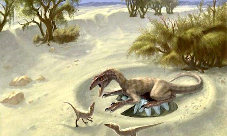 Os pequenos ovirraptorossauros da Mongólia são os dinossauros mais próximos dos pássaros atuais