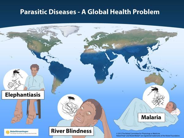 Os galardoados com o Nobel da Medicina 2015 contribuíram para curar doenças que matavam milhões de pessoas por todo o mundo