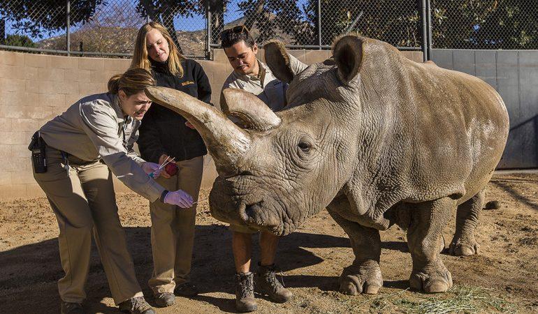 A veterinária Meredith Clancy, do Zoo de San Diego, examina Nola em Dezembro de 2014