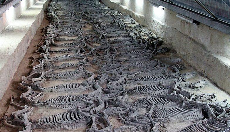 Esqueletos de cavalos sacrificados no tempo de Qi Jinggong (547 a 490 AC)