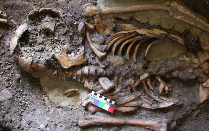 O estudo foi baseado na análise de DNA extraído de um dente molar deste esqueleto, com mais de 10.000 anos, encontrado no leste da Geórgia