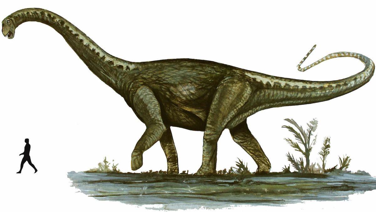 Notocolossus gonzalezparejasi: os gigantescos dinossauros habitaram na Patagónia (Argentina) durante o período Cretáceo, há cerca de 86 milhões de anos