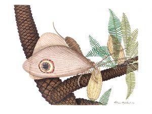 A Oregramma illecebrosa a procurar pólen nas bennettitales, uma ordem de plantas extintas do período Triásico