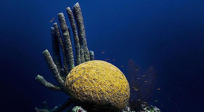 A Goodyear baseou a superfície do  Eagle-360 na textura simétrica do coral-cérebro dos mares de Belize