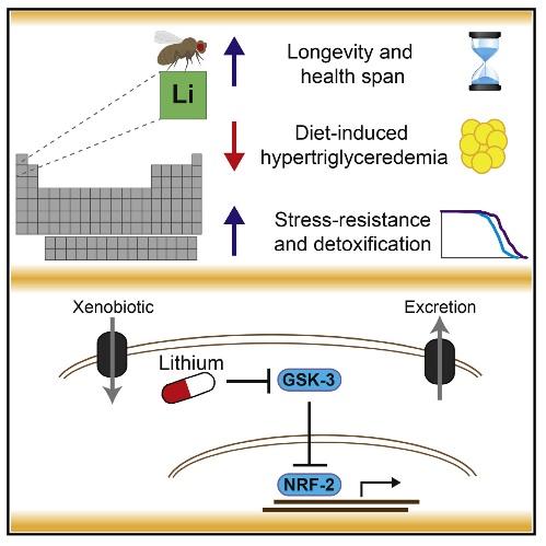 Em certas doses, o lítio aumenta a esperança de vida da Drosophila, independentemente do seu sexo e background genético